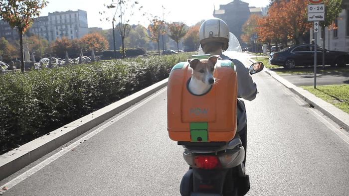 愛犬と一緒にバイクでgo!ペット用トップケース「pet On Wheels」 Forride(フォーライド)