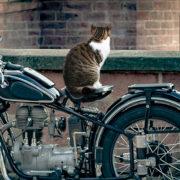 猫オンザバイク…かわいいけど退いてくれぇ!猫にバイクを乗っ取られない方法とは