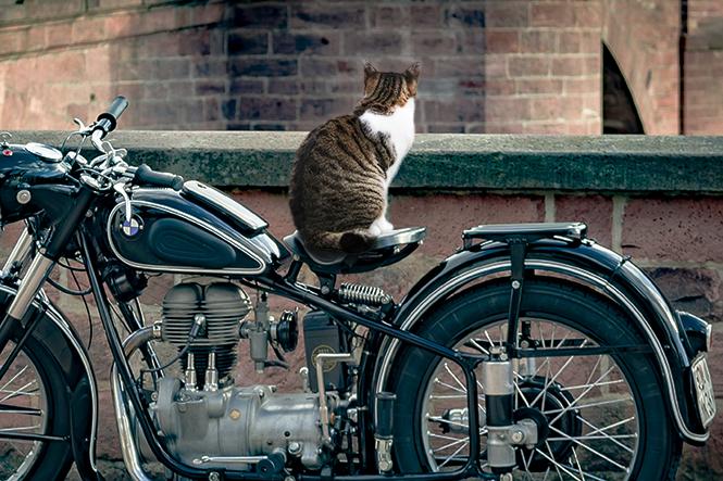 バイクを乗っ取る猫