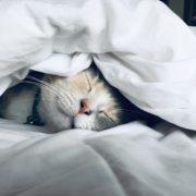 運転中の眠気対策!ぐっすり眠ってパッチリ目覚めるコツ