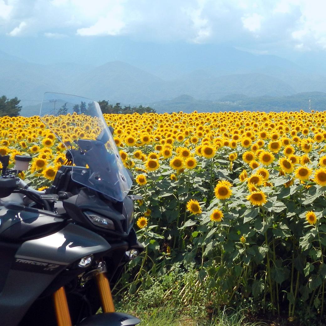 「トレッティ-、君は僕のサンフラワー」ビッグバイクを思うがままに【ヤマハ・ TRACER9 GT】